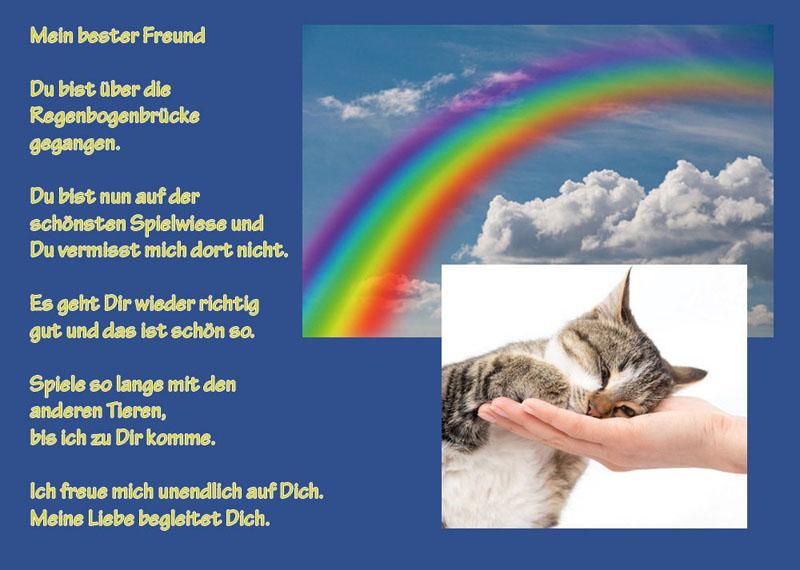 Tiertrauerurkunde-TTU-6-Katze
